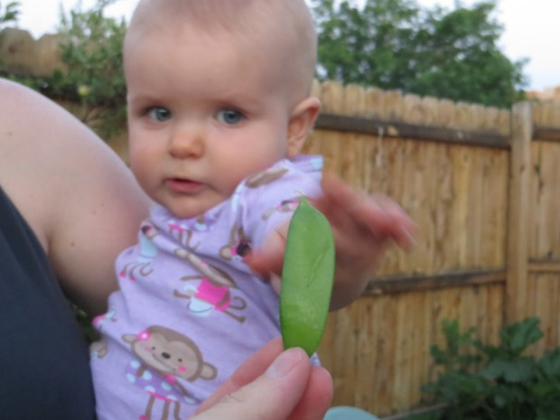 E reaching for pea