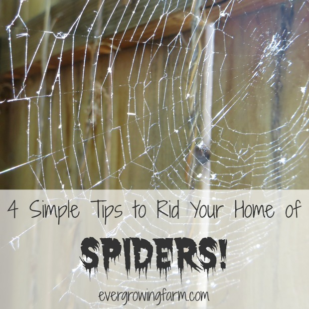 4 Simple Tips to Rid Your Home of Spiders