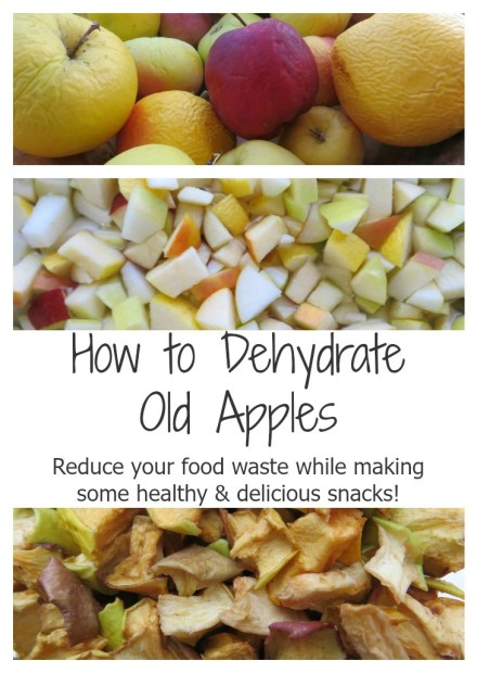 How to Dehydrate Old Apples - Reduce your food waste while making some healthy and delicious snacks ::: Ever Growing Farm