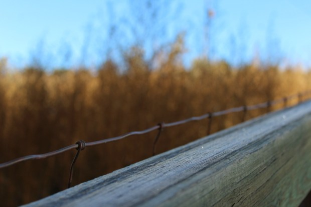 Frosty fencing