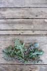 tiny kale harvest