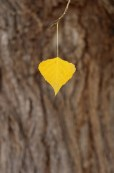 autumn-yellows-solo-leaf