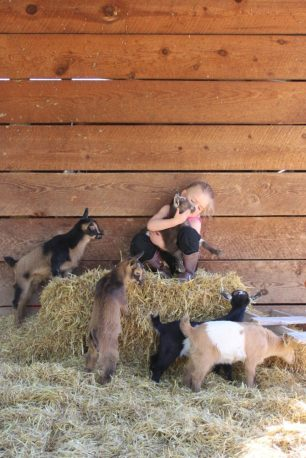 Goats kids with E