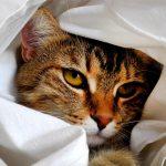 cat-1461372_1920-150x150 Tarifas