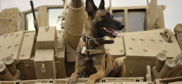 El cruel destino de muchos perros de guerra de Estados Unidos tras finalizar su servicio