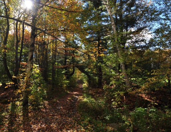 Image: A picture of a forest with the sun shining through the color changing leaves in early fall.