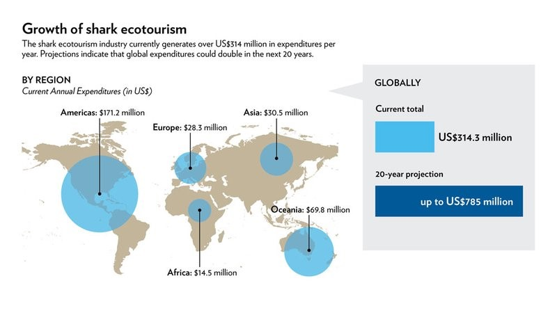 Image: Growth of shark ecotourism
