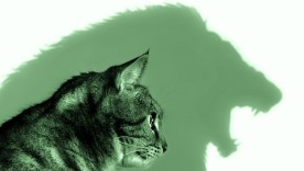 Image: Cat Lion mindset