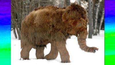 Image: Illustration of Woolly Mammoth