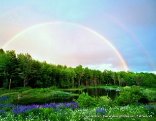 Image: rainbow over pond on a sunny day