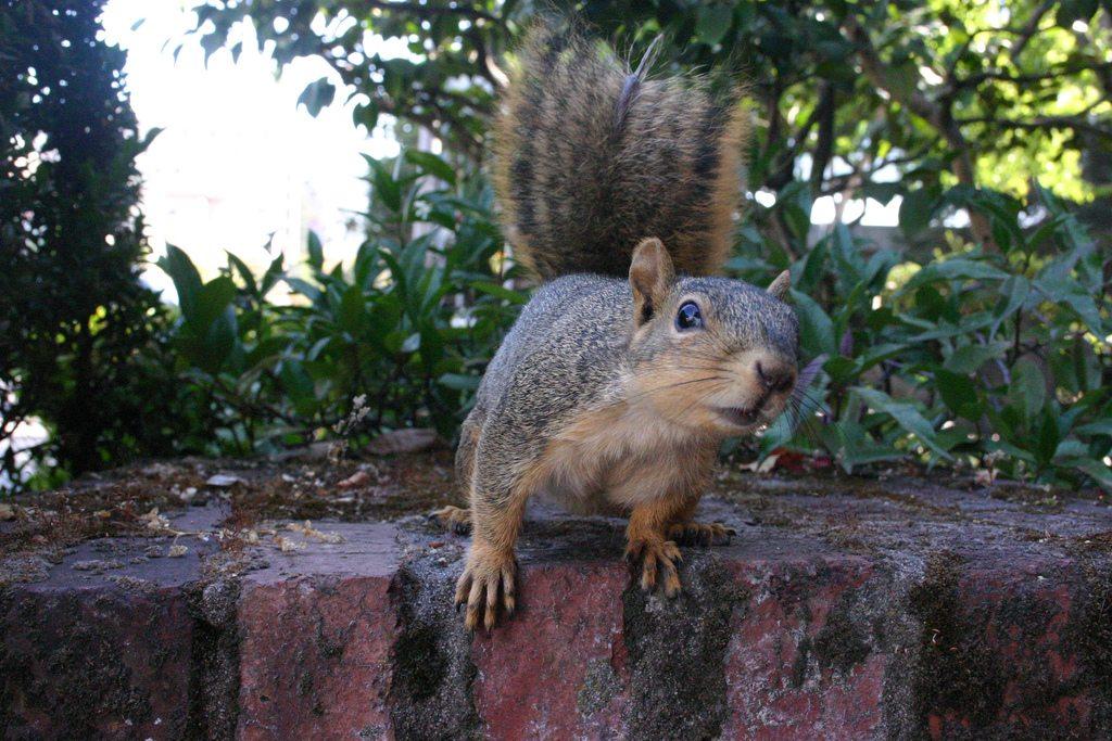 Image: A curious squirrel
