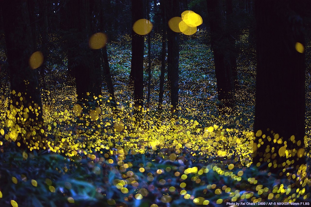 Image: A nightscape covered with fireflies