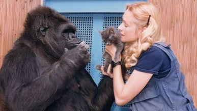 Image: KoKo the gorilla with a kitten