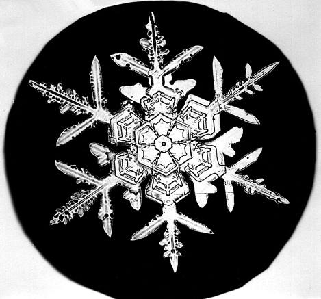 Snowflake Bentley Snowflake 1