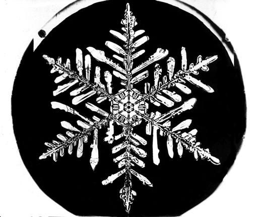 Image: Snowflake Bentley Snowflake 4