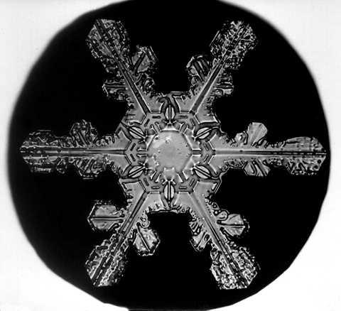 Image: Snowflake Bentley Snowflake 5