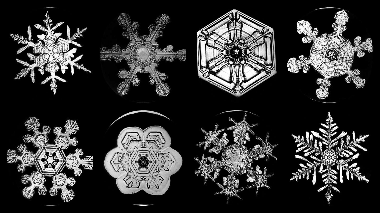 Snowflake Bentley & His Unique Snowflakes   Ever Widening