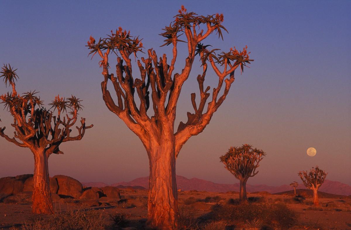 Image: Namibia landscape