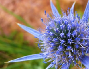 Image: Thistle flower represents happiness in the thorns from a TED talk.