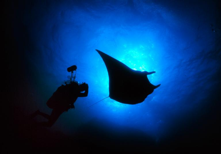Image: National Geographic Crittercam attached to a Manta Rey Back Lit with a Photographer Following It