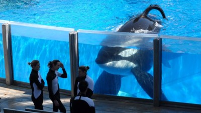 Image: Trainers and an orca from Seaworld, both seem perplexed