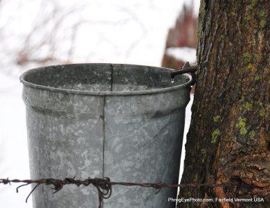 Image: Maple Syrup sap bucket