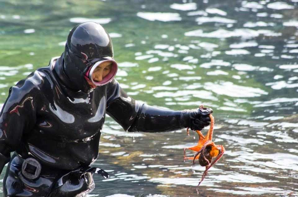 Image: a Haenyeo in her wetsuit and mask holding a octopus and walking out of the water