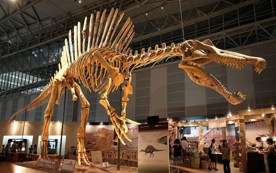 Image: Spinosaurus skeleton