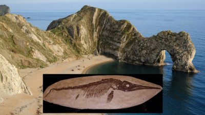 Image: the beach at Lyme Regis, England, Jurassic Coast with an Ichthyosaur skeleton