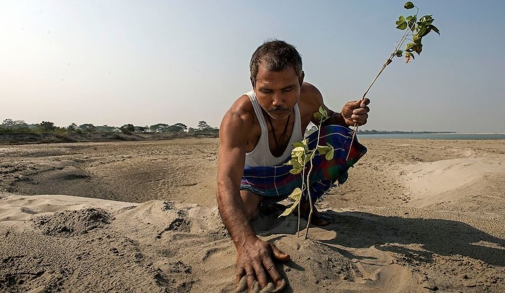 Image: Indian Man planting a tree on a beach