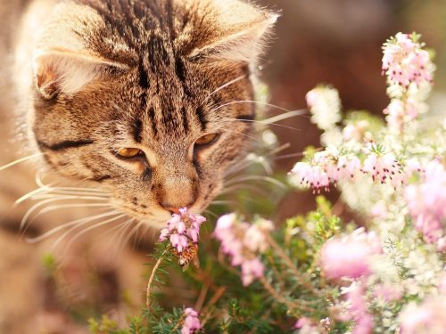 Image: An adorable cat sniffing some wildflowers