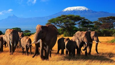 Image: Herd of 8 elephants on the savannah against a beautiful blue sky.