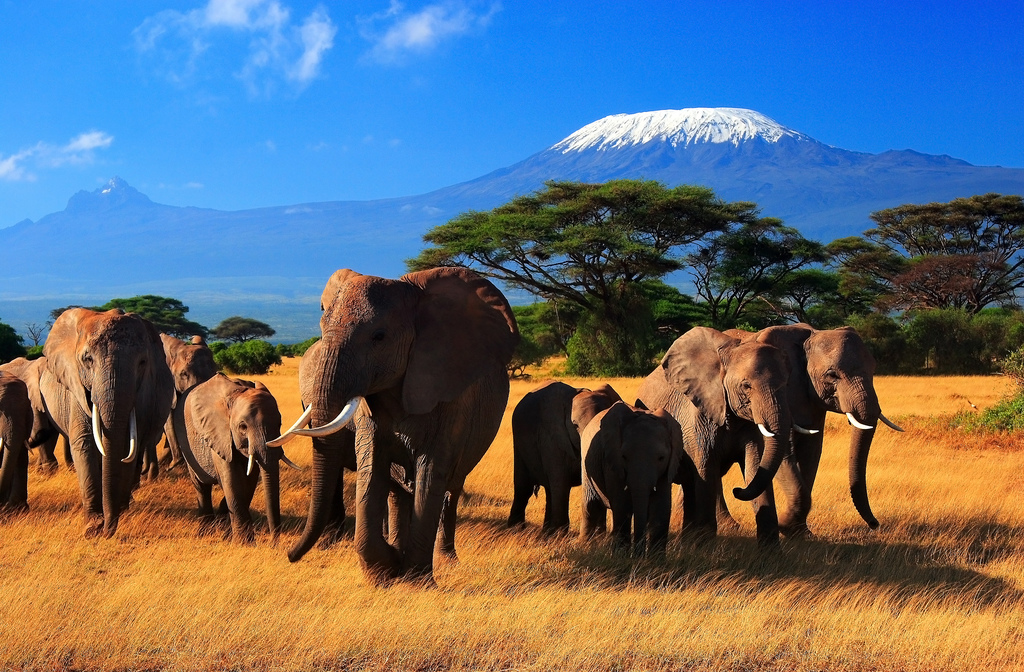 Image: Herd of 8 elephants on the savannah against a beautiful blue sky.