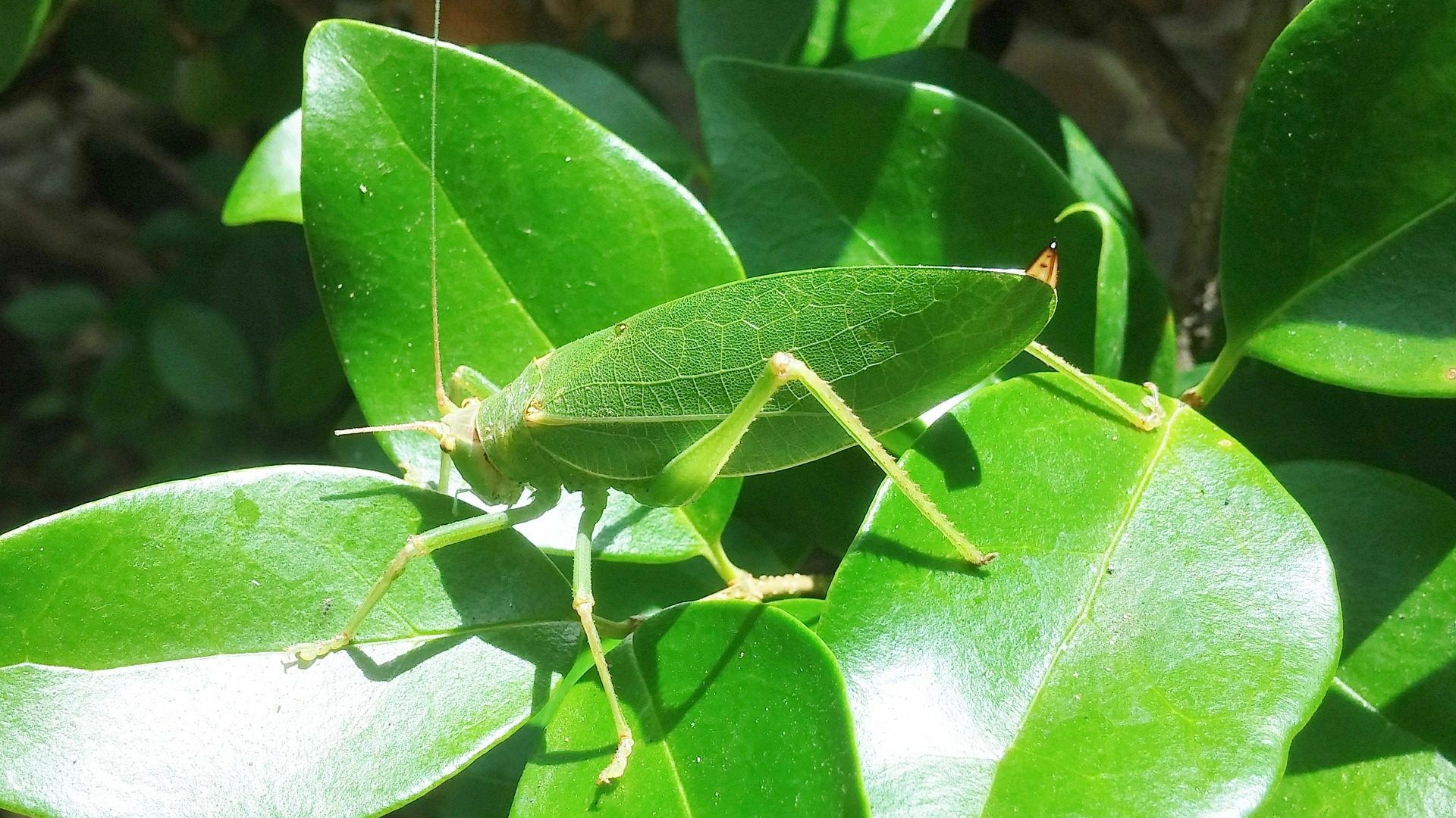 The Amazing Insects Using Mimicry To Survive
