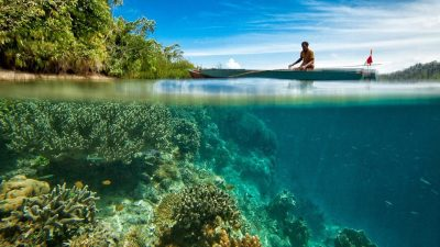 Image: Man on boat over coral reef