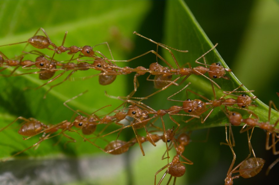 What Weaver Ants Teach Us About Problem-Solving | EWC