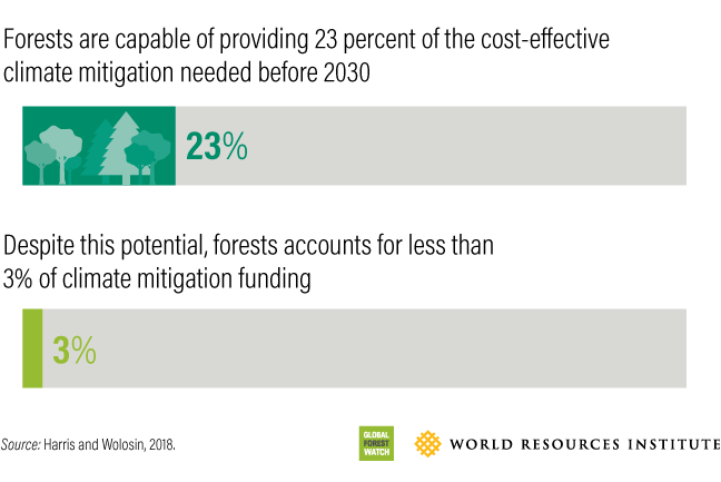 Image: a graphic representation of how important it is to stop deforestabion