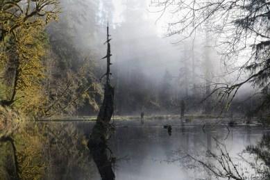 Image: Mist over a pond