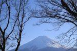 mt fuji trees - Travel Contests: March 21, 2018 - Japan, Ireland, California, & more