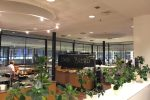 aviator lounge food drink - Aviator Airport Lounge - Copenhagen CPH review