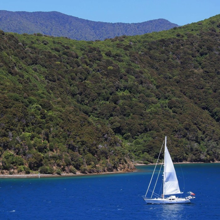 sailing queen charlotte sound 700x700 - Nelson to Wellington, New Zealand by bus and ferry via Picton