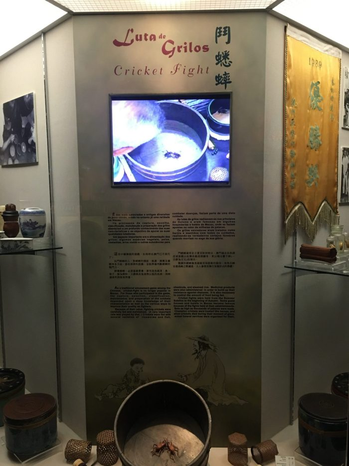 macau museum cricket fighting 700x933 - A day trip to Macau from Hong Kong