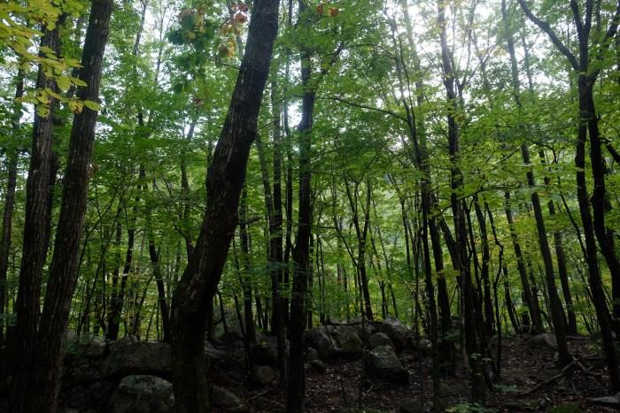 seoraksan national park biseondae hike trees 700x467 - Hiking in Seoraksan National Park - Biseondae