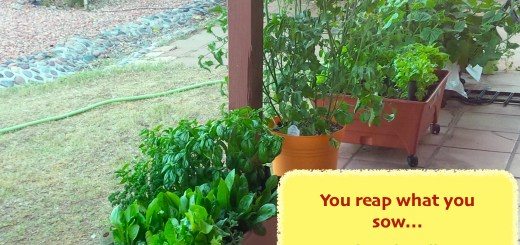 Plant what you want to grow, Beth Terry @EverybodysLost.com