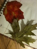 Red and Silver Maple Leaves