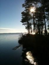 Blackwater NWR Wetlands