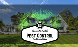 Pest-control-essential-oils-house-feature
