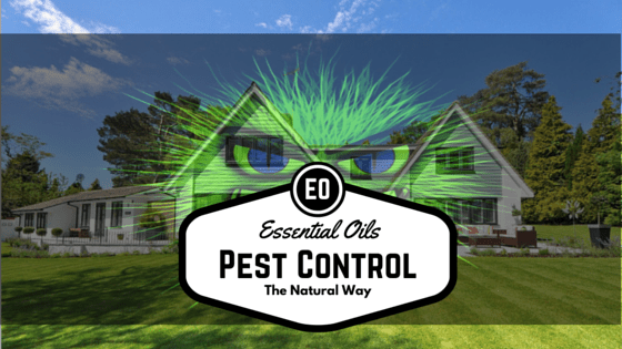 Pest control with essential oils house feature