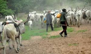 Cows cause panic in South-East school