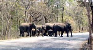 Elephants kill two in Bauchi, near Yankari Games Reserve